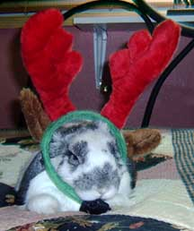 bunny with antlers